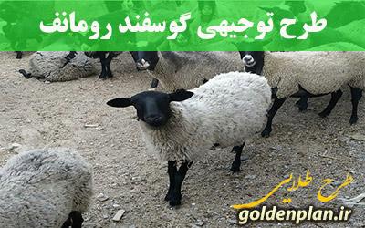 طرح توجیهی پرورش گوسفند چندقلوزا رومانف ۹۹